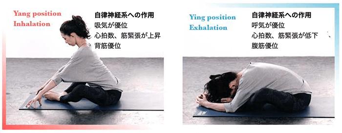 呼吸と交感神経の関係